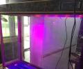 龙鱼 鹦鹉鱼  成品鱼缸 专业定做鱼缸